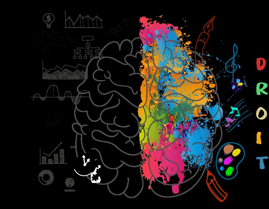 cerveau droit cerveau gauche
