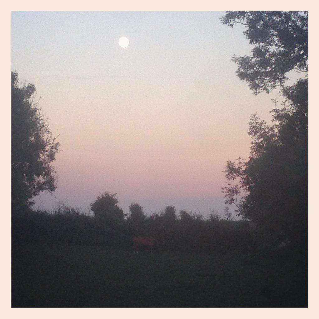 Cheval, pleine lune, pas de calais, cote d'opale, les bobos à la ferme